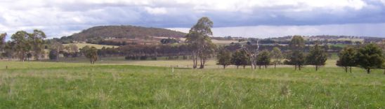 Improved Pasture in the Northern Tablelands